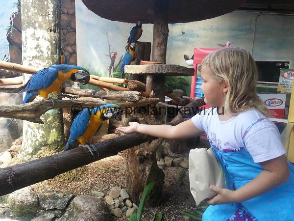 парк птиц лангкави
