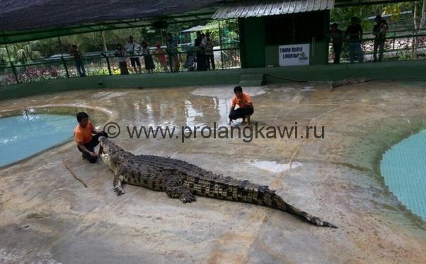 Крокодиловая ферма Лангкави
