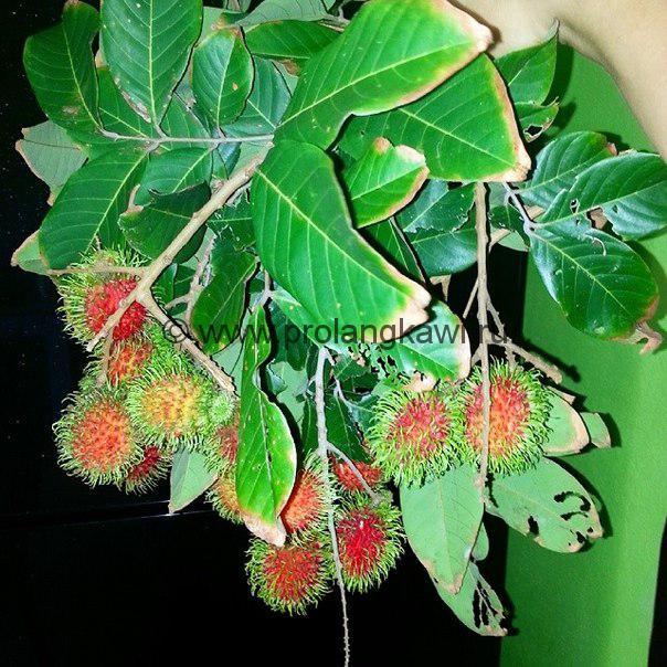 Малазийские фрукты